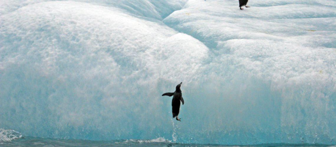 SouthSandwichIs,PenguinJumpingUpOnIceberg,2006