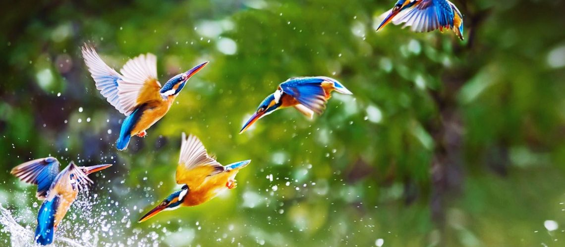 beautiful-birds-flying-widescreen-full-hd-wallpaper-free-background-images-download-desktop-wallpaper-download-wallpaper-iphone-wallpaper-1920x1080-1
