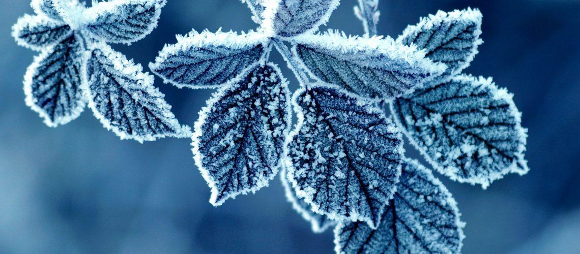frozen-flower-wallpaper2