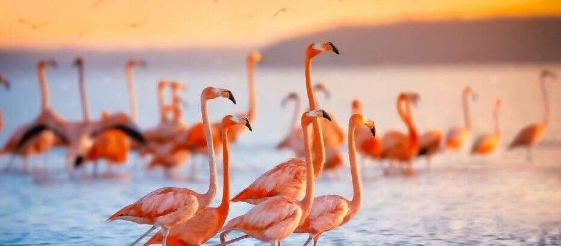 iStock-Flamingo